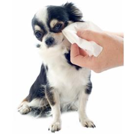 Pielęgnacja oczu psa