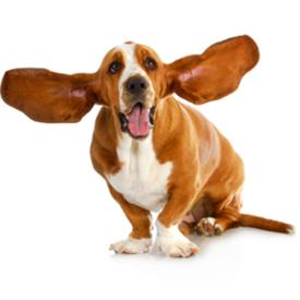 Pielęgnacja uszu